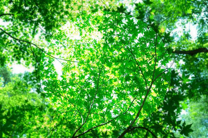 我喜緑色。